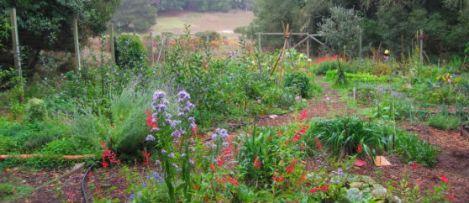 garden_banner