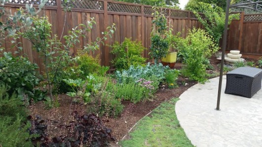 cropped-backyard-garden.jpg
